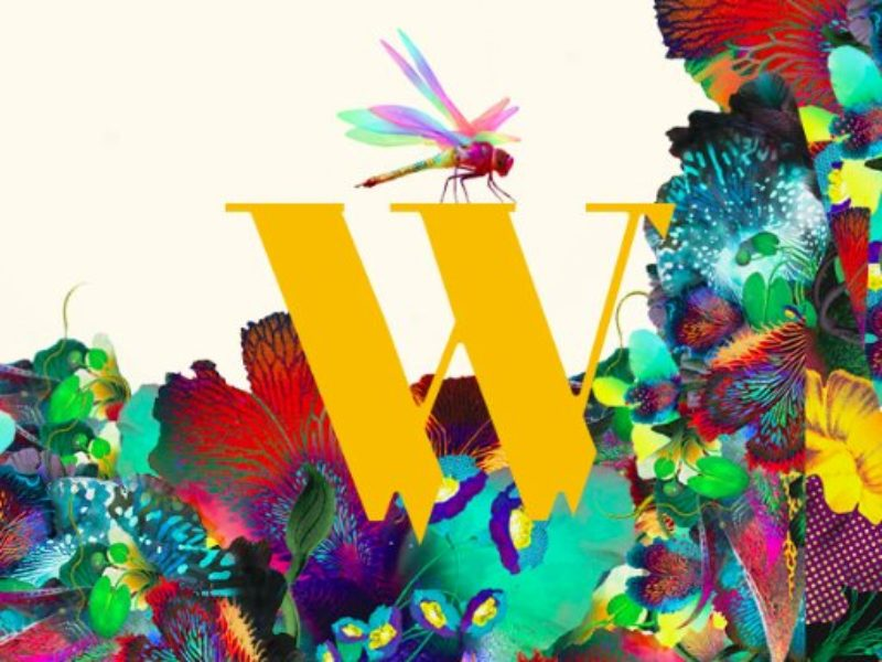 wilderness-festival